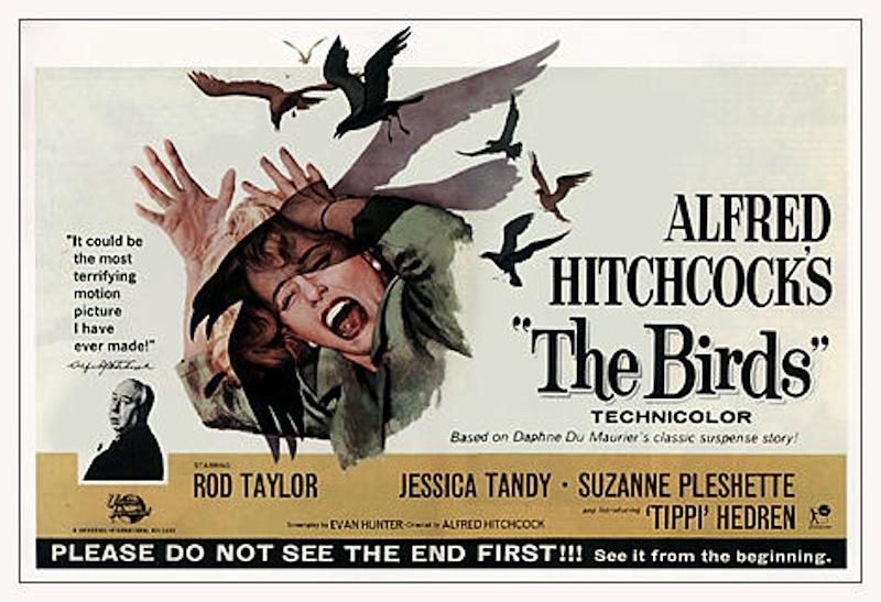 The Birds film poster