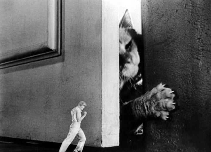 Incredle Shrinking Man vs Cat